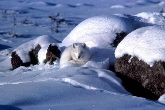 Photo courtesy of U.S. Fish and Wildlife Service. Photographer Keith Morehouse