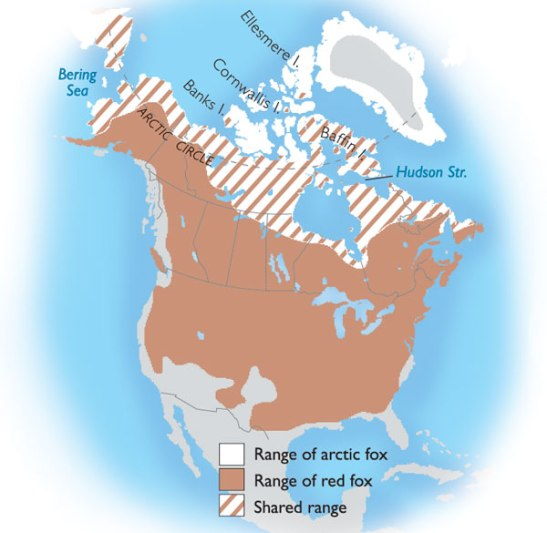 Map obtained at Canadian Geographic http://www.canadiangeographic.ca/kids/animal-facts/arctic_fox.asp