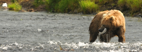 Photo courtesy of U.S. Fish and Wildlife Service