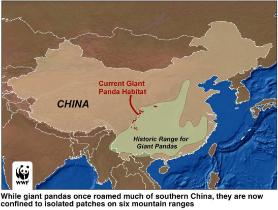 china-giant-panda-map-habitat-range-history-wwf