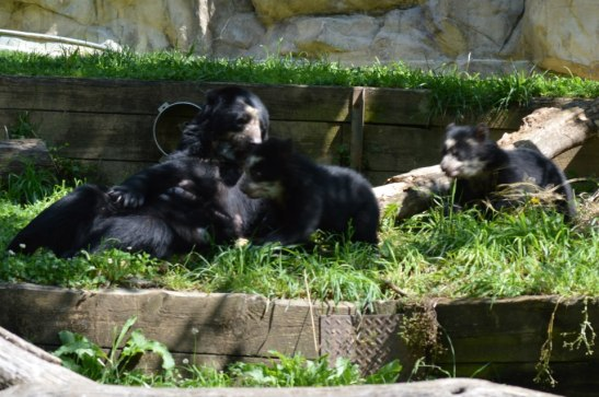 Billie Jean and her cubs, Kurt and Nicole. Photo by Maymie Higgins.