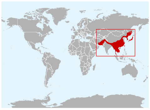 Asiatic black bear range.  Range map courtesy of IUCN.