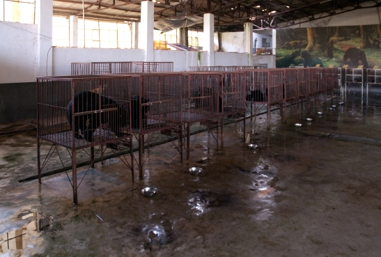 Bear bile farm in Asia. Photo from the Creative Commons.