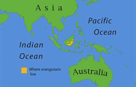 Orangutan range map obtained at National Geographic Kids. http://kids.nationalgeographic.com/staticfiles/NGS/Shared/StaticFiles/NGKids/Image/map-orangutan.jpg