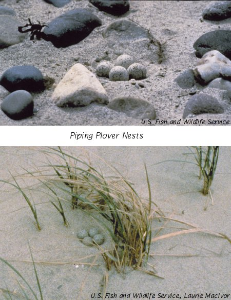 Photos courtesy of U.S. Fish and Wildlife Service.