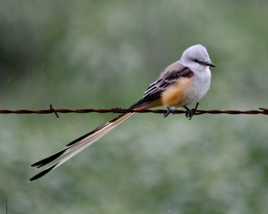 Photo courtesy of U.S. Fish and Wildlife